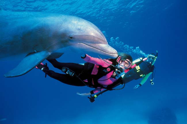 Learn the basics on open water diving